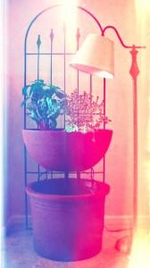 aquaponiksystem als deko und zum selber bauen. Black Bedroom Furniture Sets. Home Design Ideas
